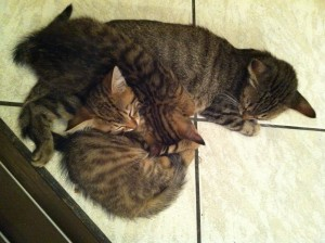 Panarama cats asleep